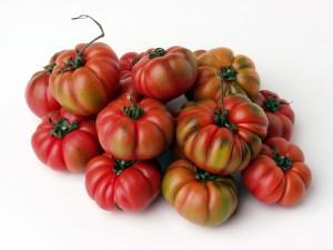 pomodoro-costoluto
